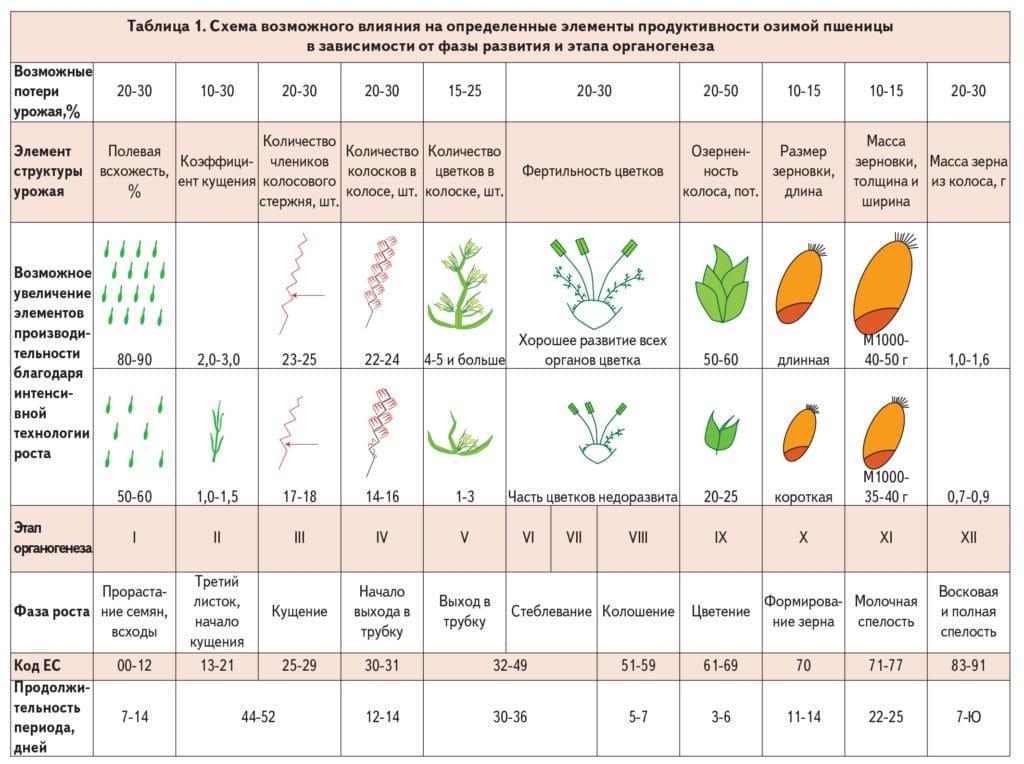 Состав овощей и последовательность их выращивания в теплицах: что выращивать вместе?