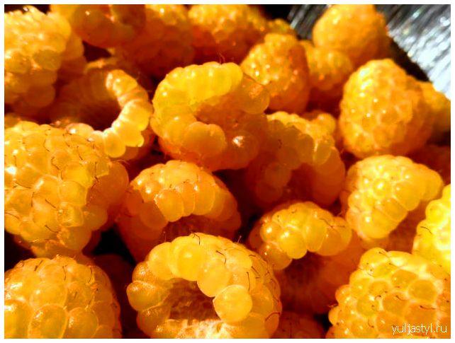 Желтая малина: сорта, как выращивать, уход, отзывы